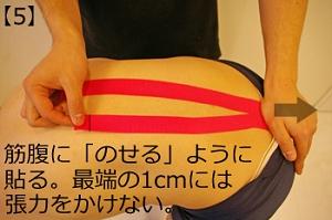 仙棘筋5.jpg